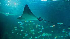 Sharkencounter