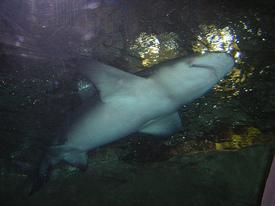 Sharkencounter2