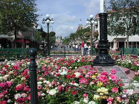 Mainstreetflowers