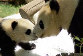 Pandababyandmom